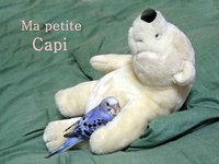 ma_petite_capi_1