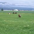 富良野の牧場